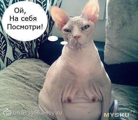 Она беременна прикол коты