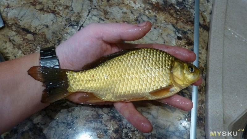 рыба толстолобик купить в украине