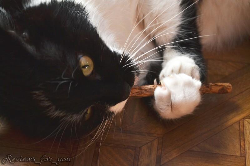 Aliexpress: 'Потап и его слюни'. Обзор палочки с кошачьей мятой