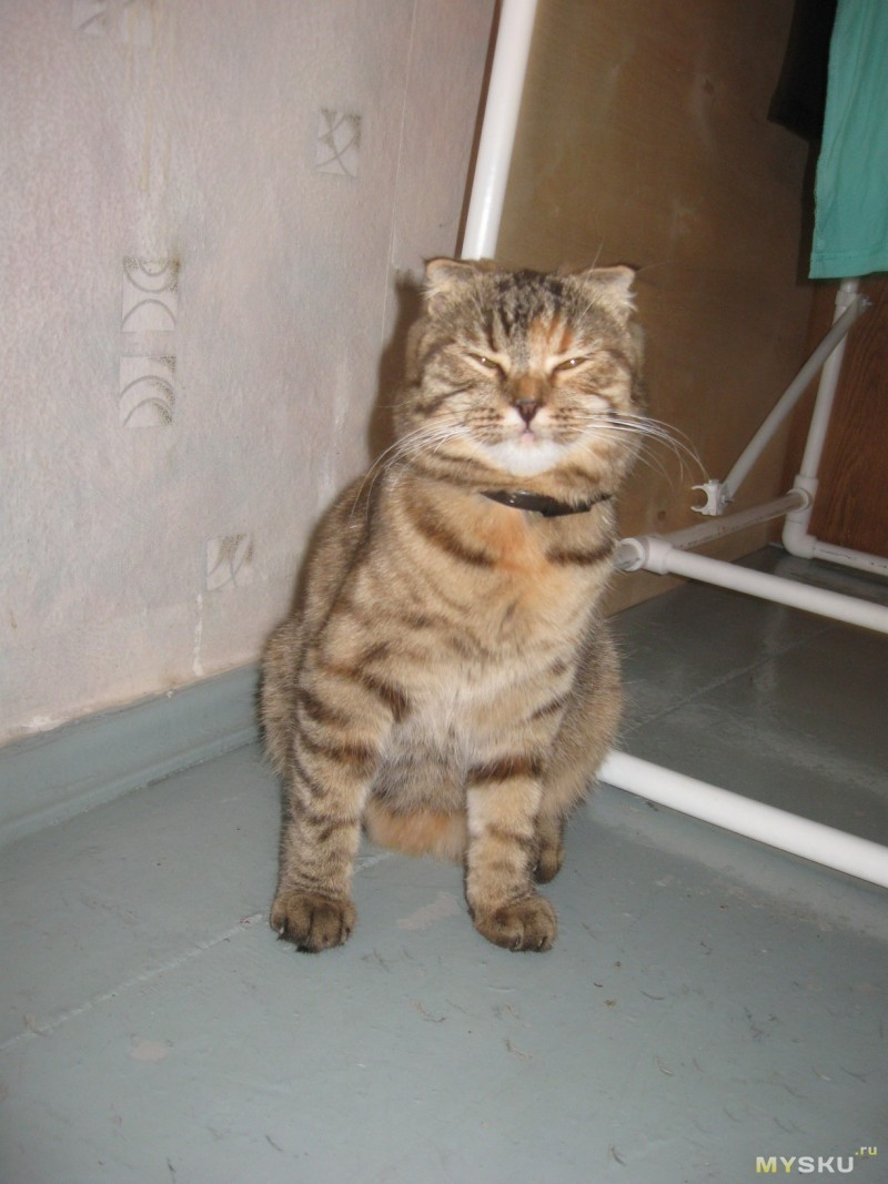 кошка без товара
