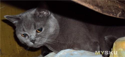 Кот под ванной