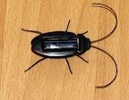 Novel Solar Powered Cockroach (Black)