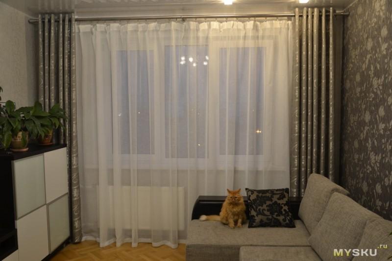 Квартиры в сеуле фото кошки