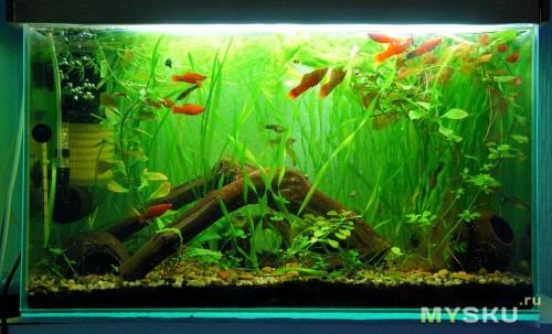 Общий план аквариума