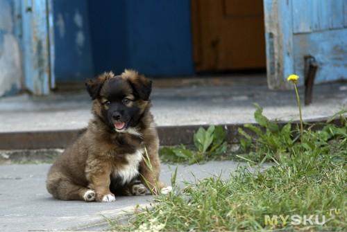 мой щенок