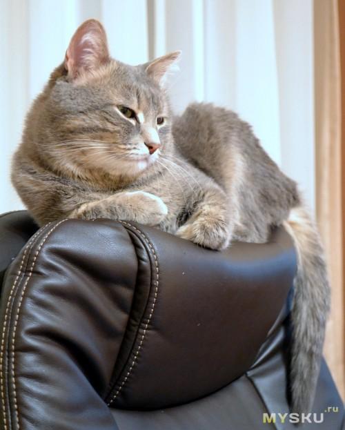 кресло-котэ