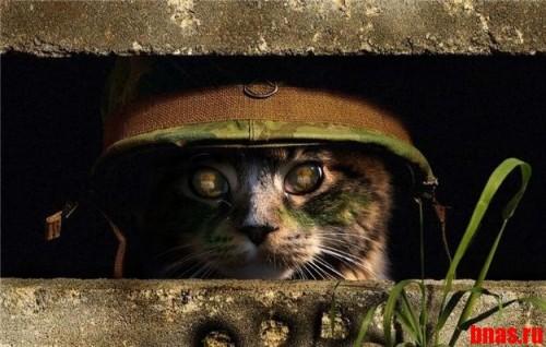 Тактический кот