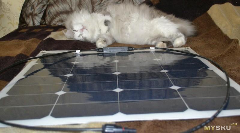 Вид панели на фоне кота. Или наоборот