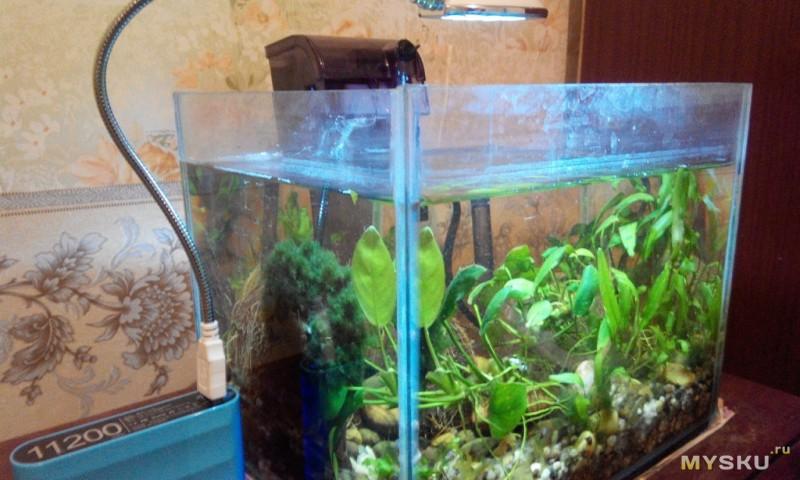 Как сделать лампу для аквариума видео 17