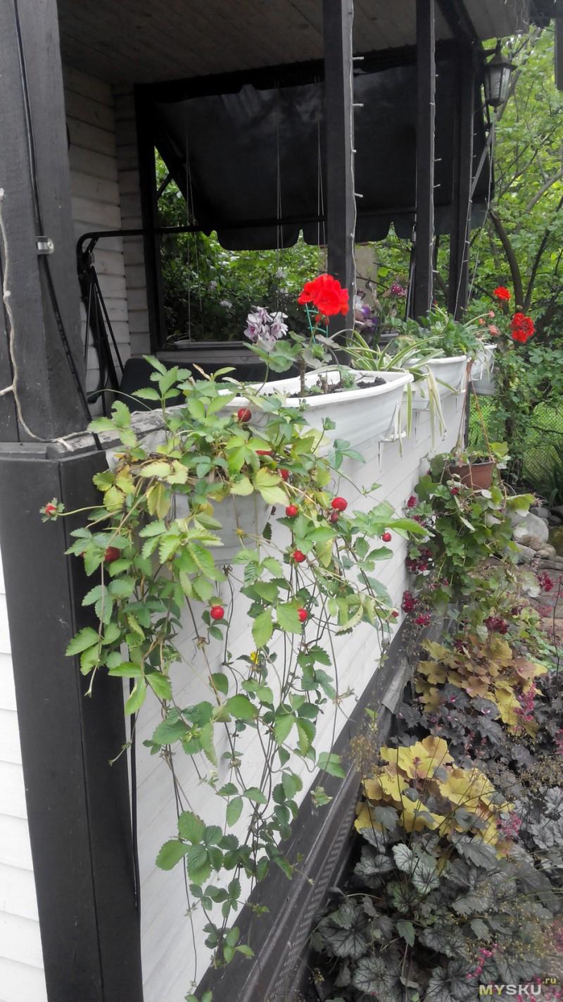 Как выращивать аквариумные растения из семян с алиэкспресс?