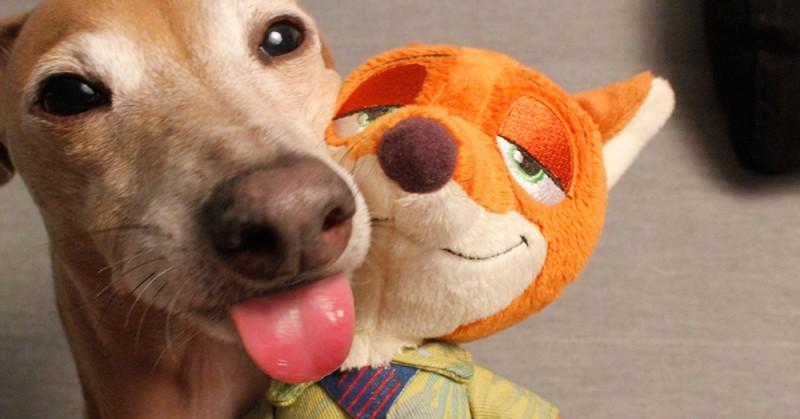 Зелфи с собакой Яффи